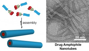 TEM image of nanotubes formed by self-assembly of an anticancer drug amphiphile. These nanotubes possess a fixed drug loading of 38% (w/w). Image from Cui Lab.