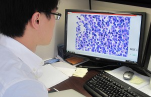 Pei-Hsun Wu of the Wirtz lab examining pancreatic cancer cells. (Photo by Mary Spiro)