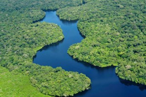 Amazonas_Brazilian_state-Amazon_rainforest-Americas-Brazil-Geography_of_South_America-Intact_forest_landscape-List_of_countries_by_forest_area-List_of_rivers_of_Amazonas_Brazilian_state-List_of_the_largest_country_subdivisions_by_area-Neotr